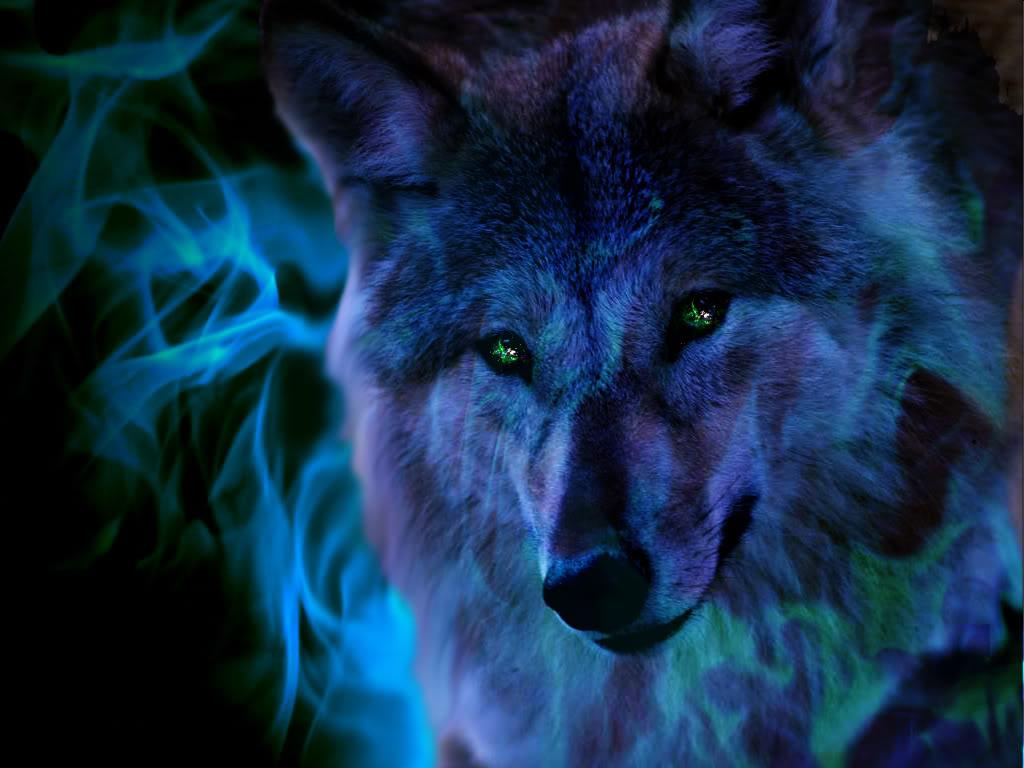 Image Fire Wolf Wallpaper Yvt2jpg ShadowLand Online Wiki 1024x768