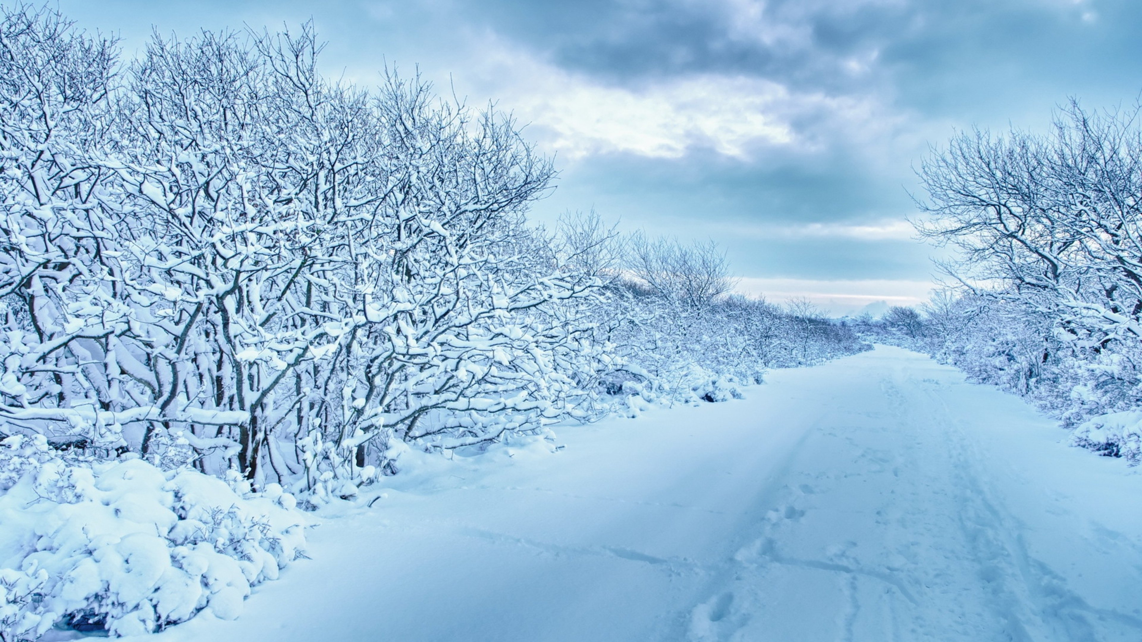 Wallpaper 3840x2160 snow trees road traces winter cloudy 4K 3840x2160