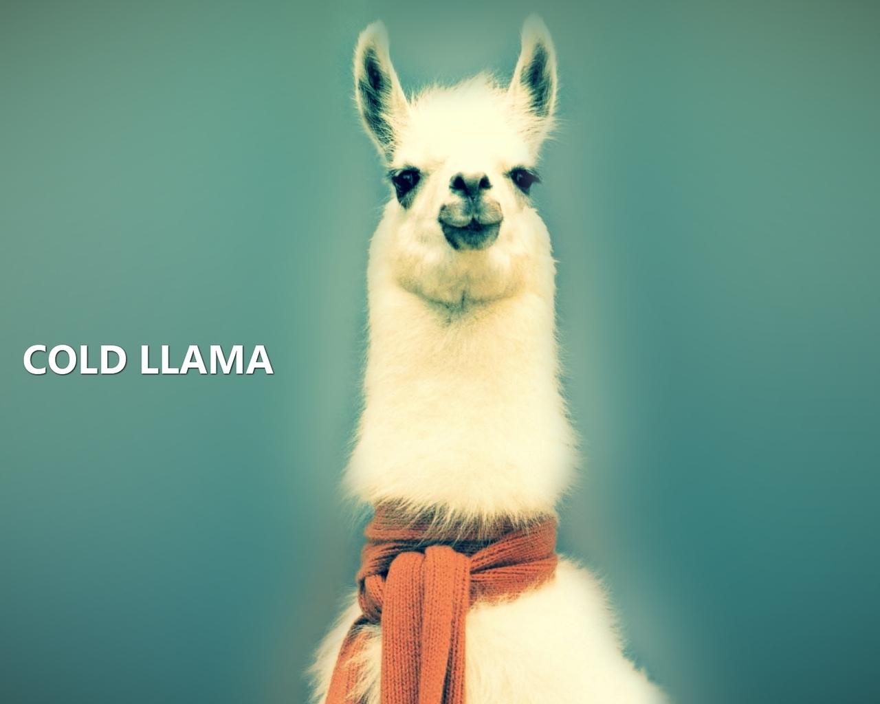 Wallpaper Lama COLD LLAMA animals Wallpapers 3d for desktop 3d 1280x1024