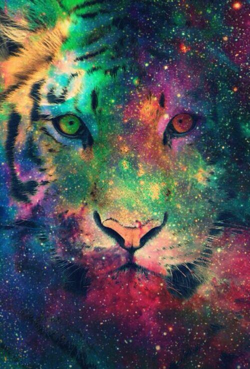 tiger galaxy wallpaper wallpapers Pinterest 500x738