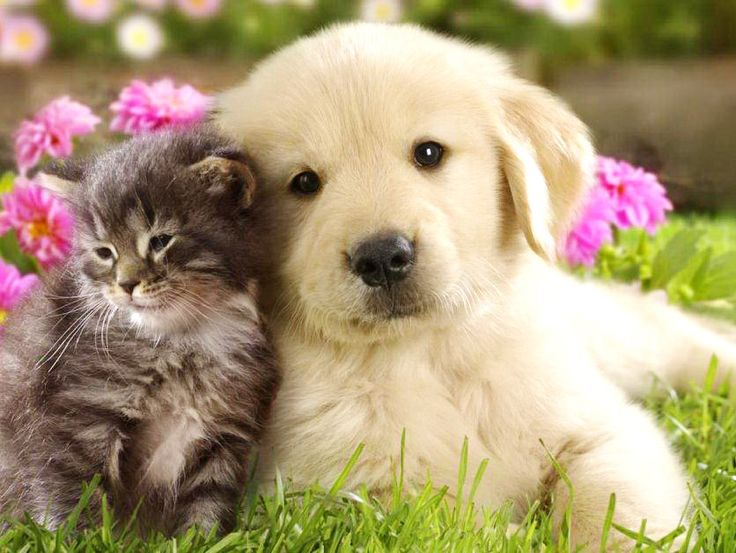 wallpapers cat wallpapers cute cat cute puppy dog wallpapers cat 736x553