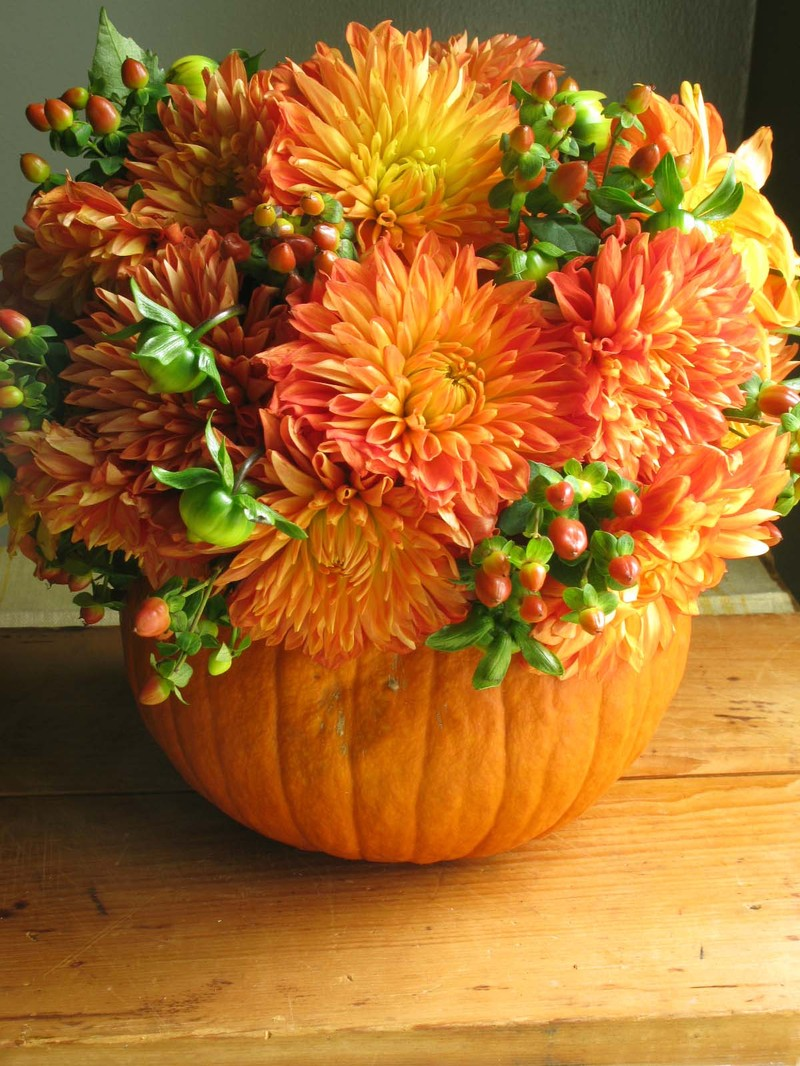 Fall Flowers And Pumpkins Fabulous fall flower 800x1066