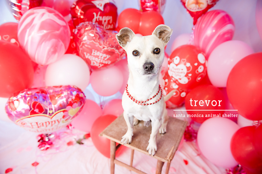 Valentines Day Shelter Dogs Cats Awwwww   Democratic 840x559