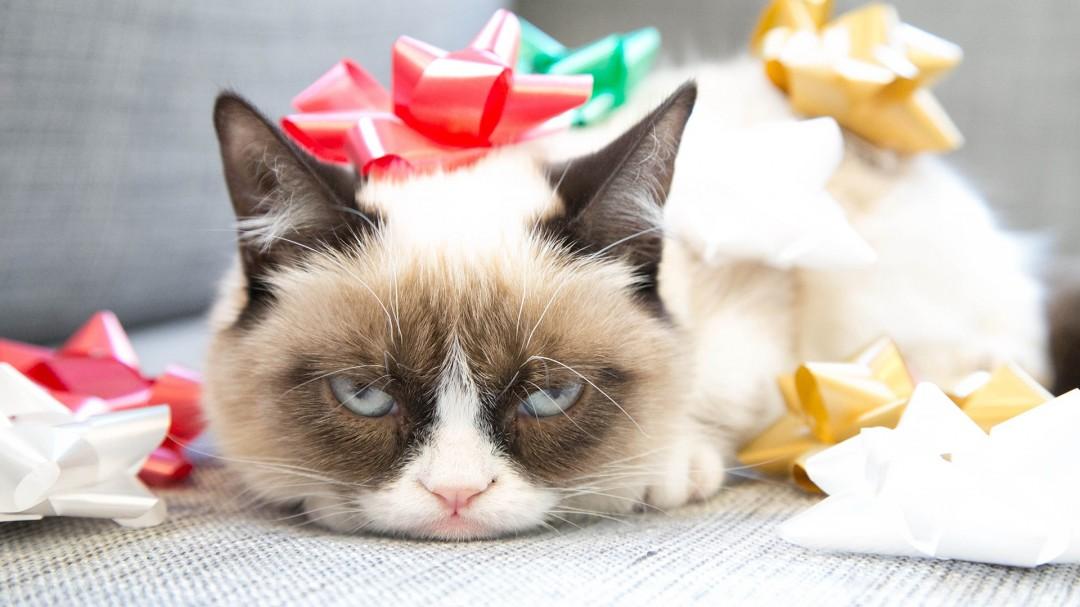Grumpy Cat Meme Funny HD Wallpaper of Animals   hdwallpaper2013com 1080x607