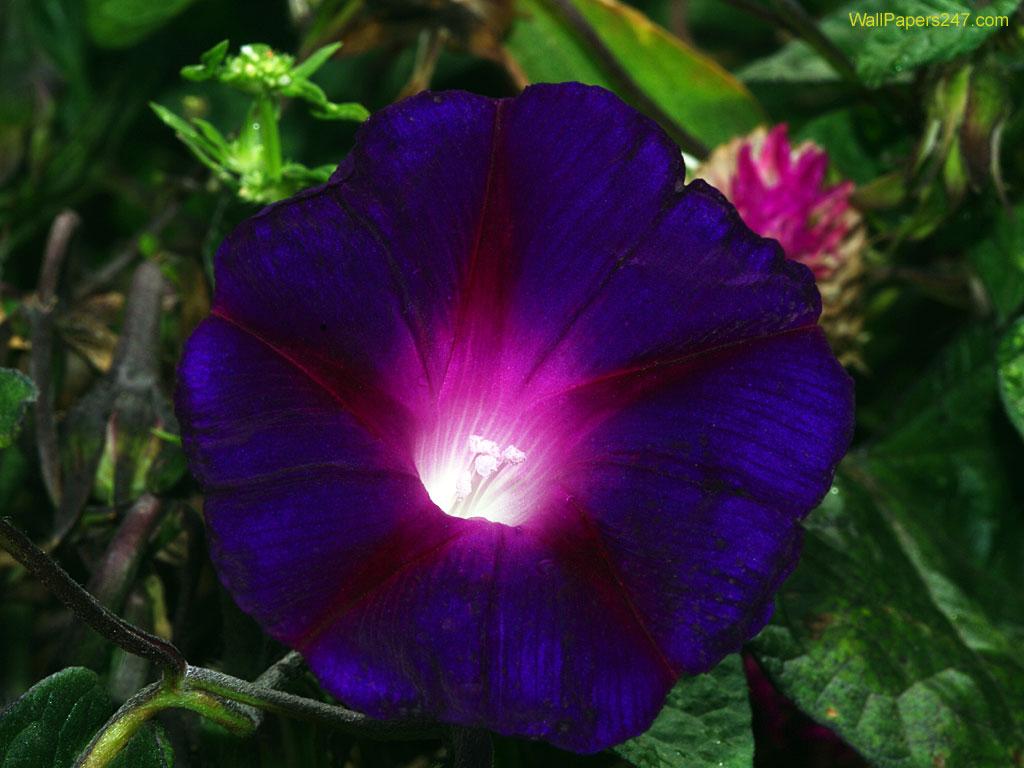 purple flowers wallpaper purple flowers wallpaper purple flowers 1024x768