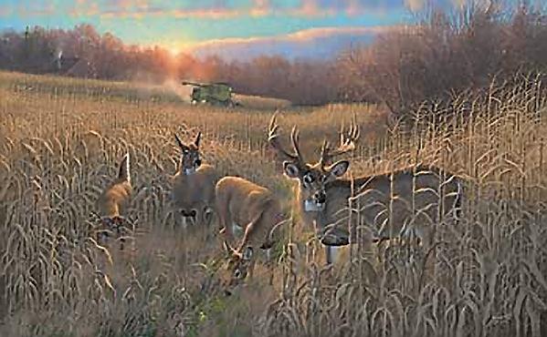 Whitetail Deer Paintings Wallpaper Harvest time whitetail deerjpg 599x370