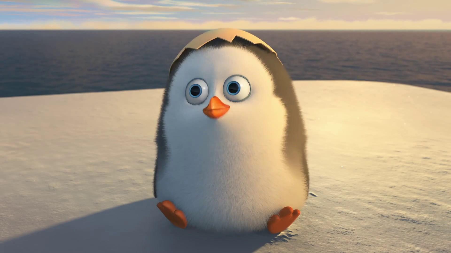Cute Baby Penguins wallpaper 1920x1080 45962 1920x1080