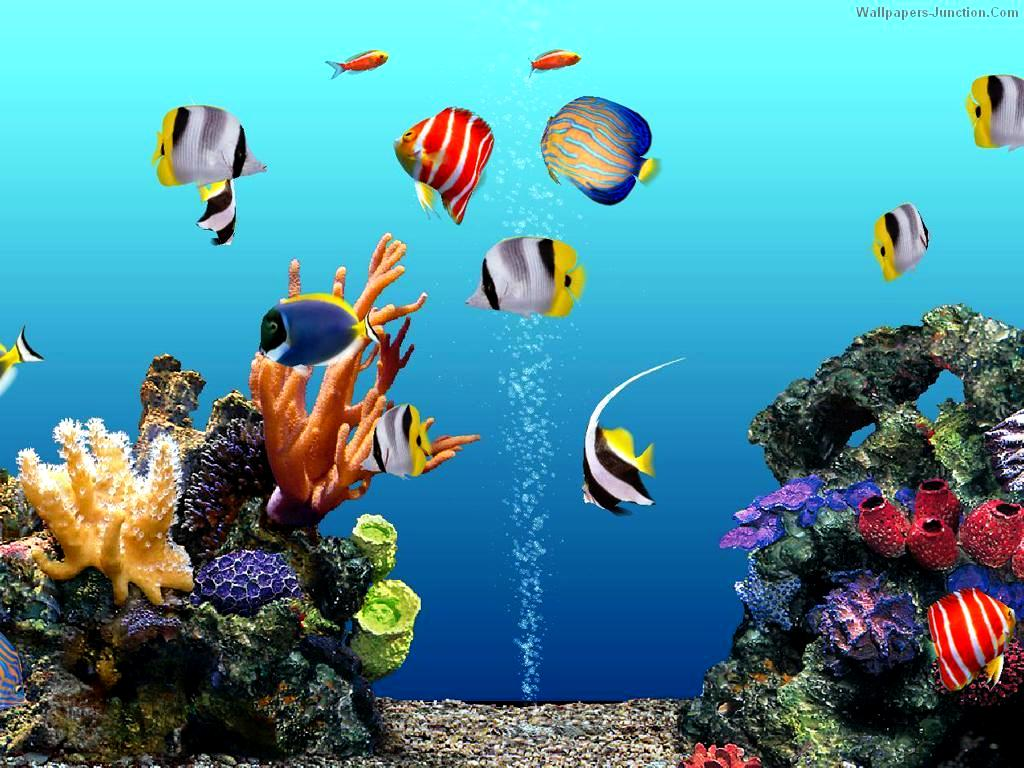 Aquarium Backgrounds 3D Aquarium photos Creating Unique PC With 1024x768