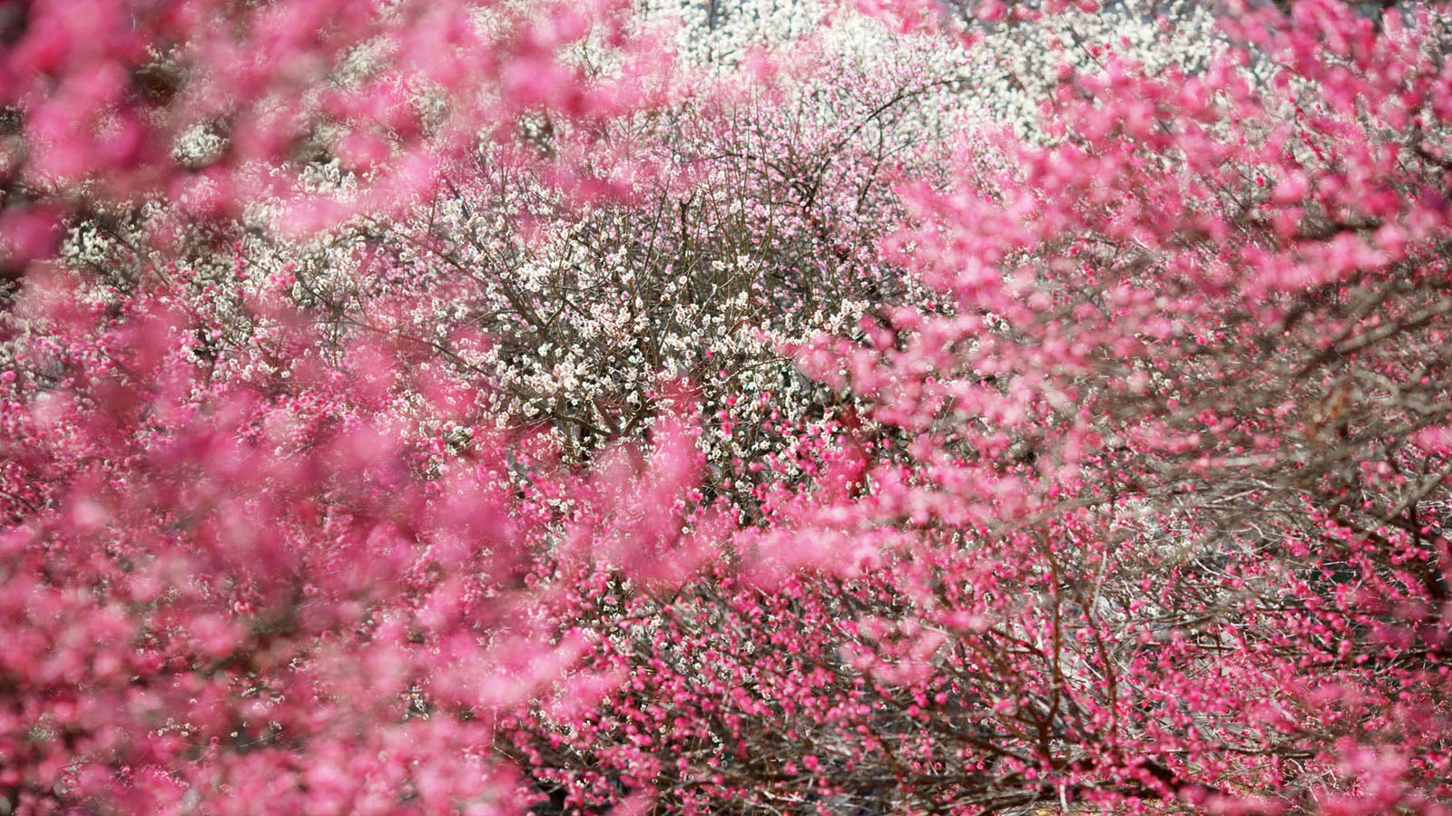Spring Flowers Wallpaper 1600x900