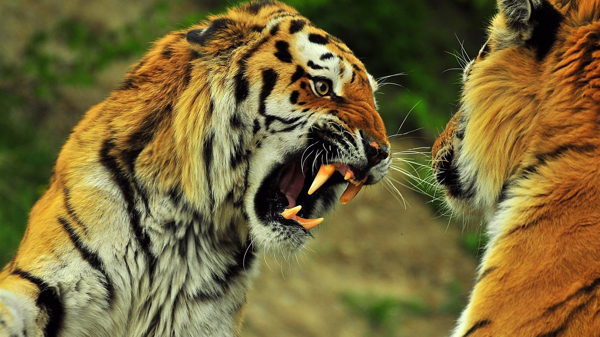 Wild Animal Desktop Wallpaper Wallpapersafari