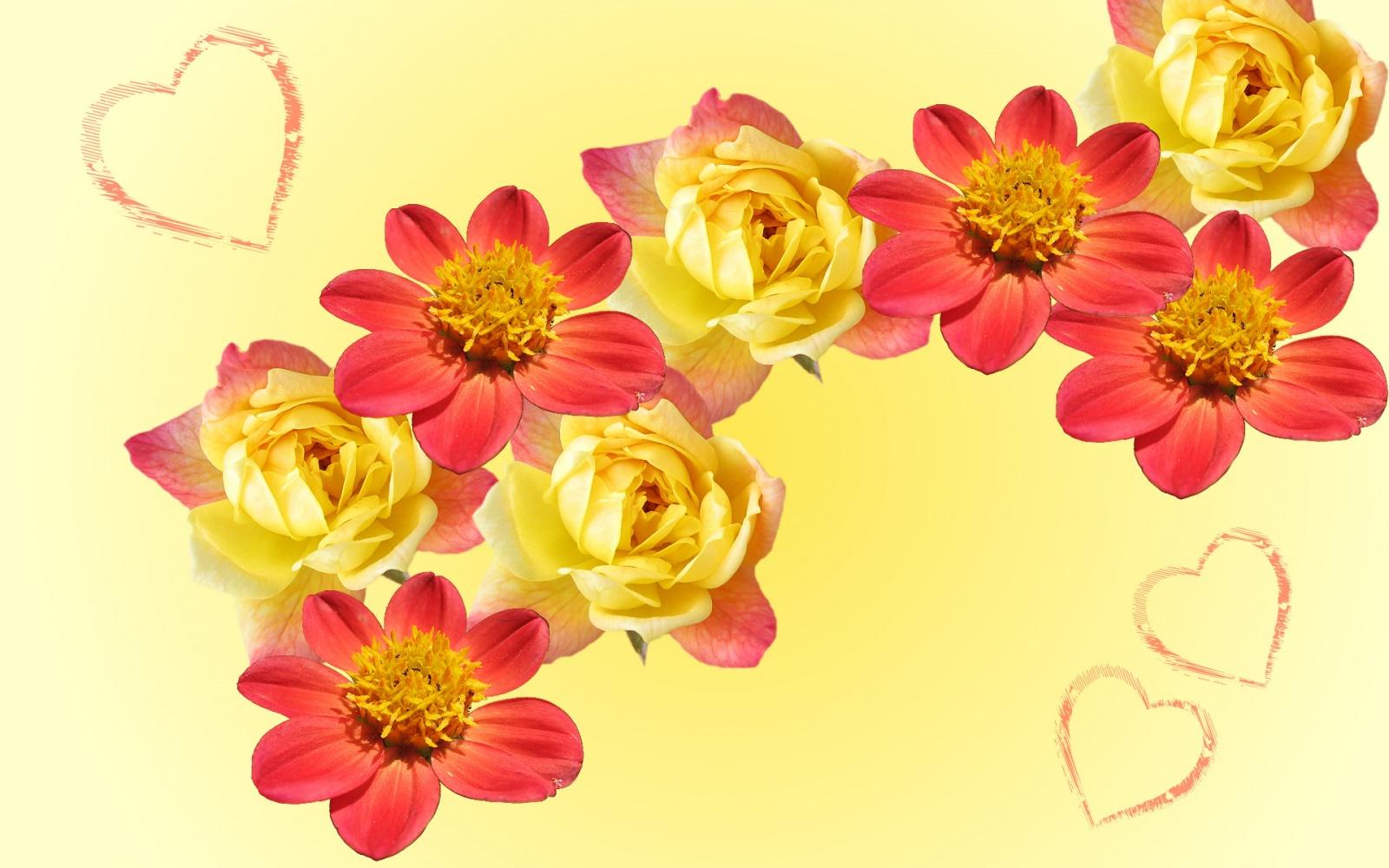 Orange Flower Wallpaper   8165 1600x1000