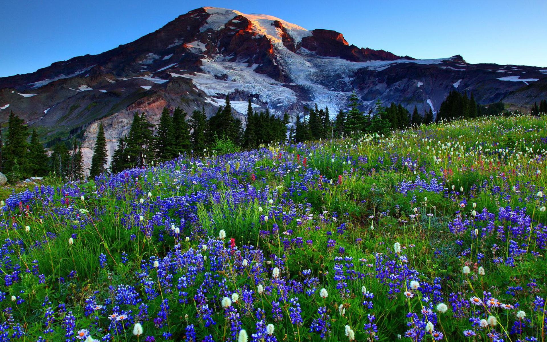 MOUNT RAINIER WALLPAPER   114719   HD Wallpapers   [desktopinHQcom 1920x1200