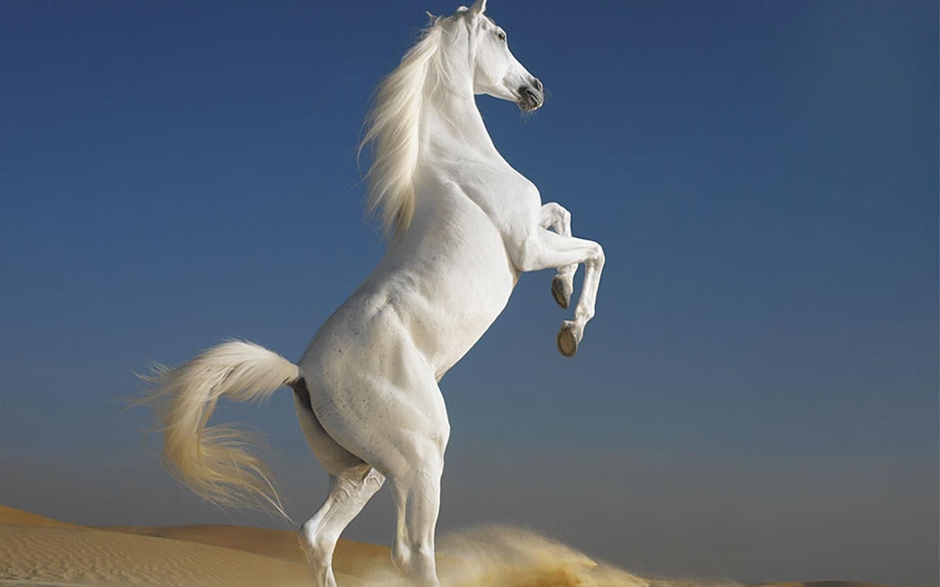 lesson horse wallpaper 1920x1200