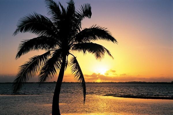 palm trees 2000x1333 wallpaper Sunsets Wallpapers Desktop 600x399