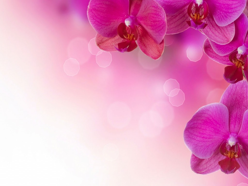 Beautiful Purple Orchid Flowers Hd Wallpaper 964 1024x768