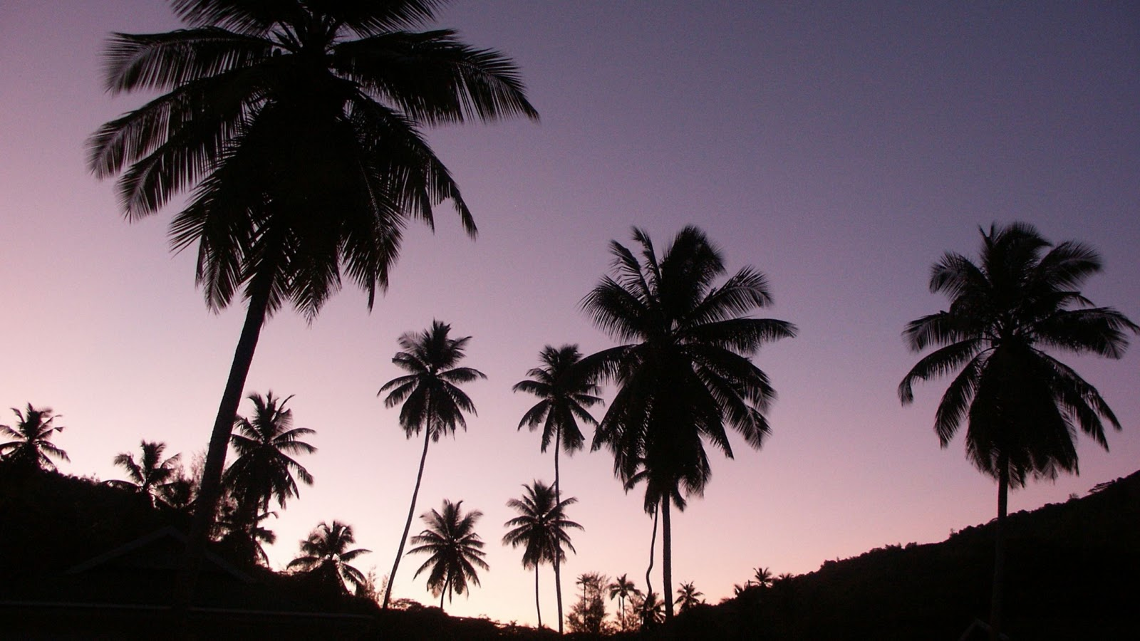 Palm Tree Wallpaper Tumblr Hd Pictures 4 HD Wallpapers 1600x900