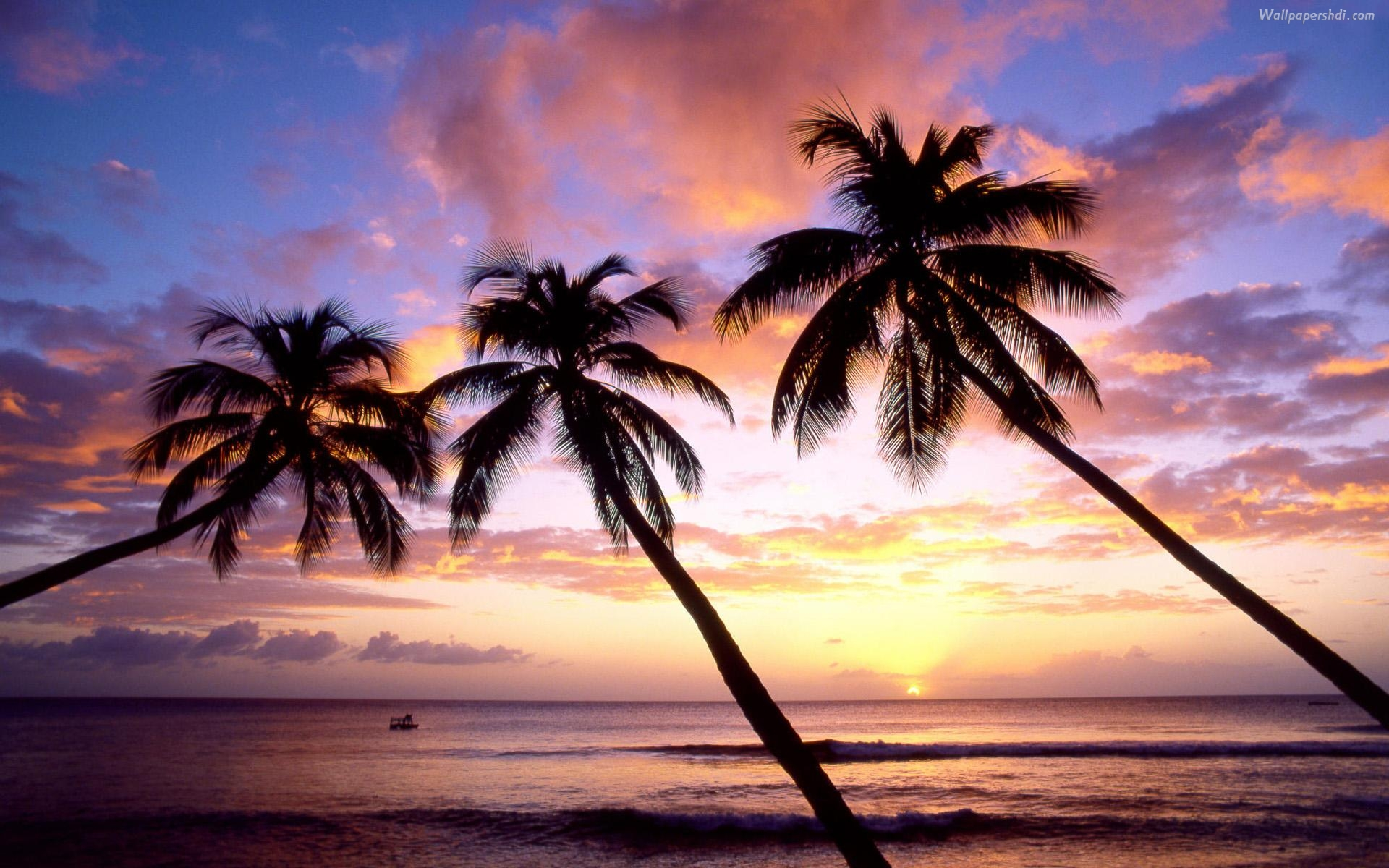 Palm Tree Sunset Wallpaper Images amp Pictures   Becuo 1920x1200