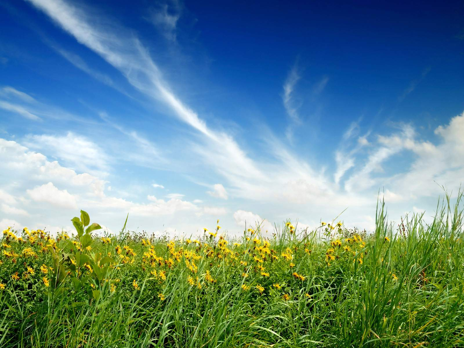 Sunny Nature Day wallpaper