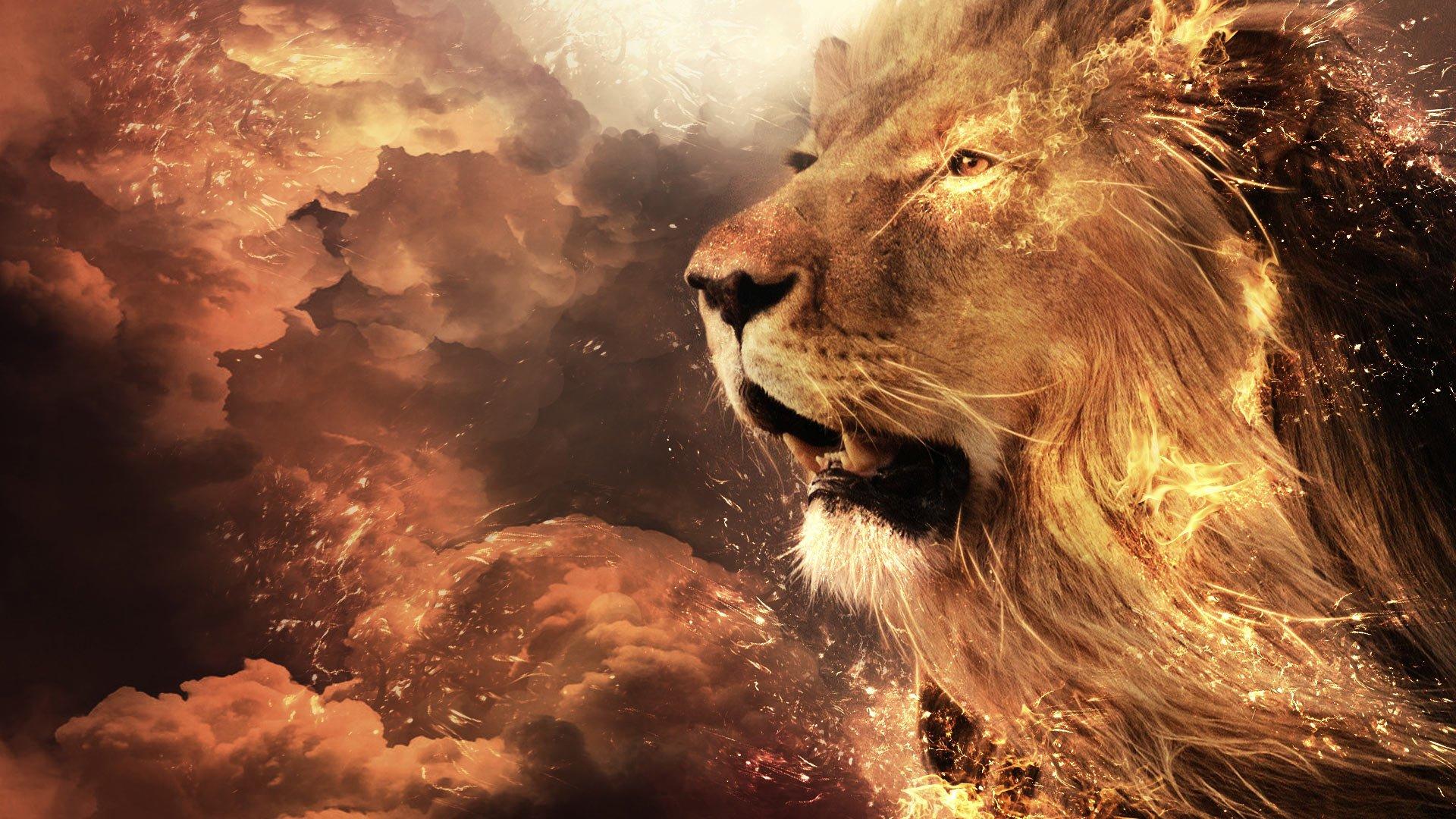 lion art wallpaper wallpapersafari
