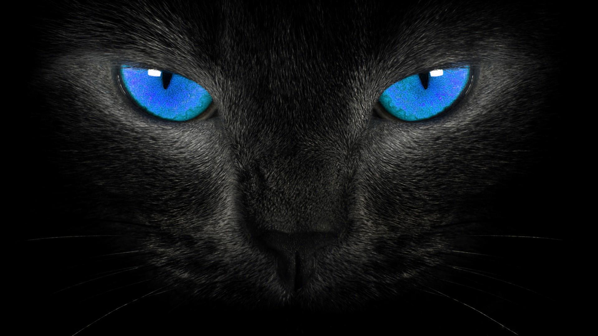 Description Black Cat Eyes Wallpaper is a hi res Wallpaper for pc 1920x1080