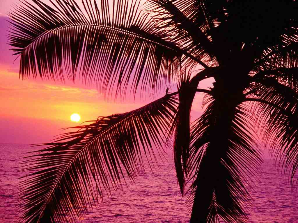Find here some high resolution pink sunset wallpapers in HD that you 1024x768