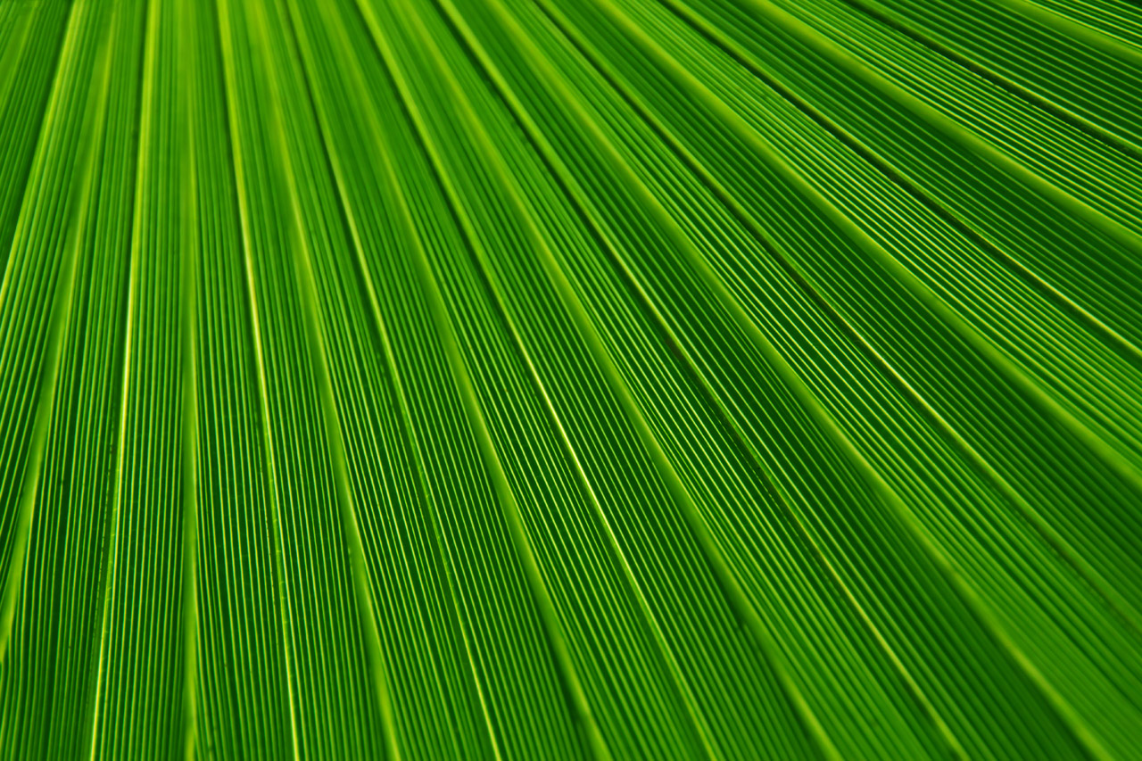 Palm Leaf Texture Stock Photo HD   Public Domain Pictures 1280x853
