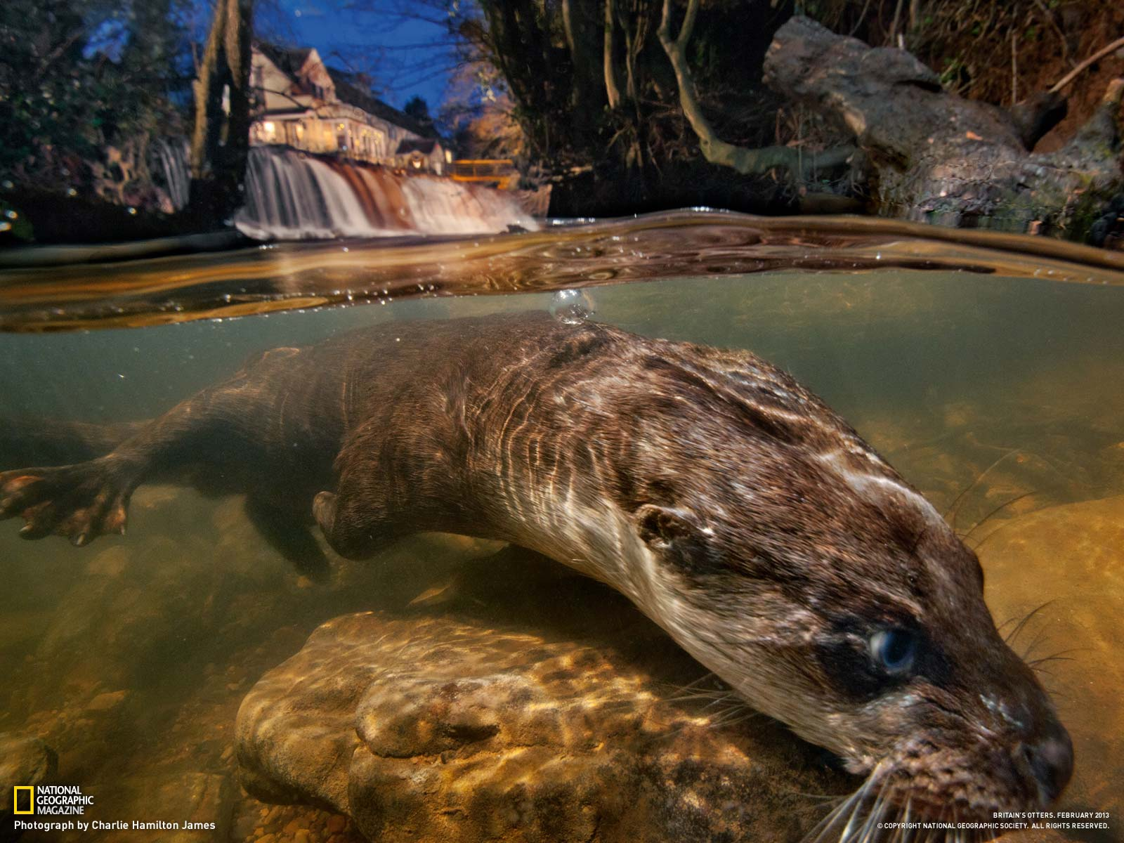 Otter Picture    Animal Wallpaper    National Geographic Photo of the 1600x1200