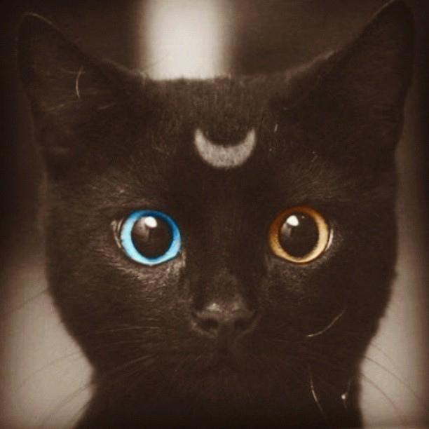 hypoallergenic cat food
