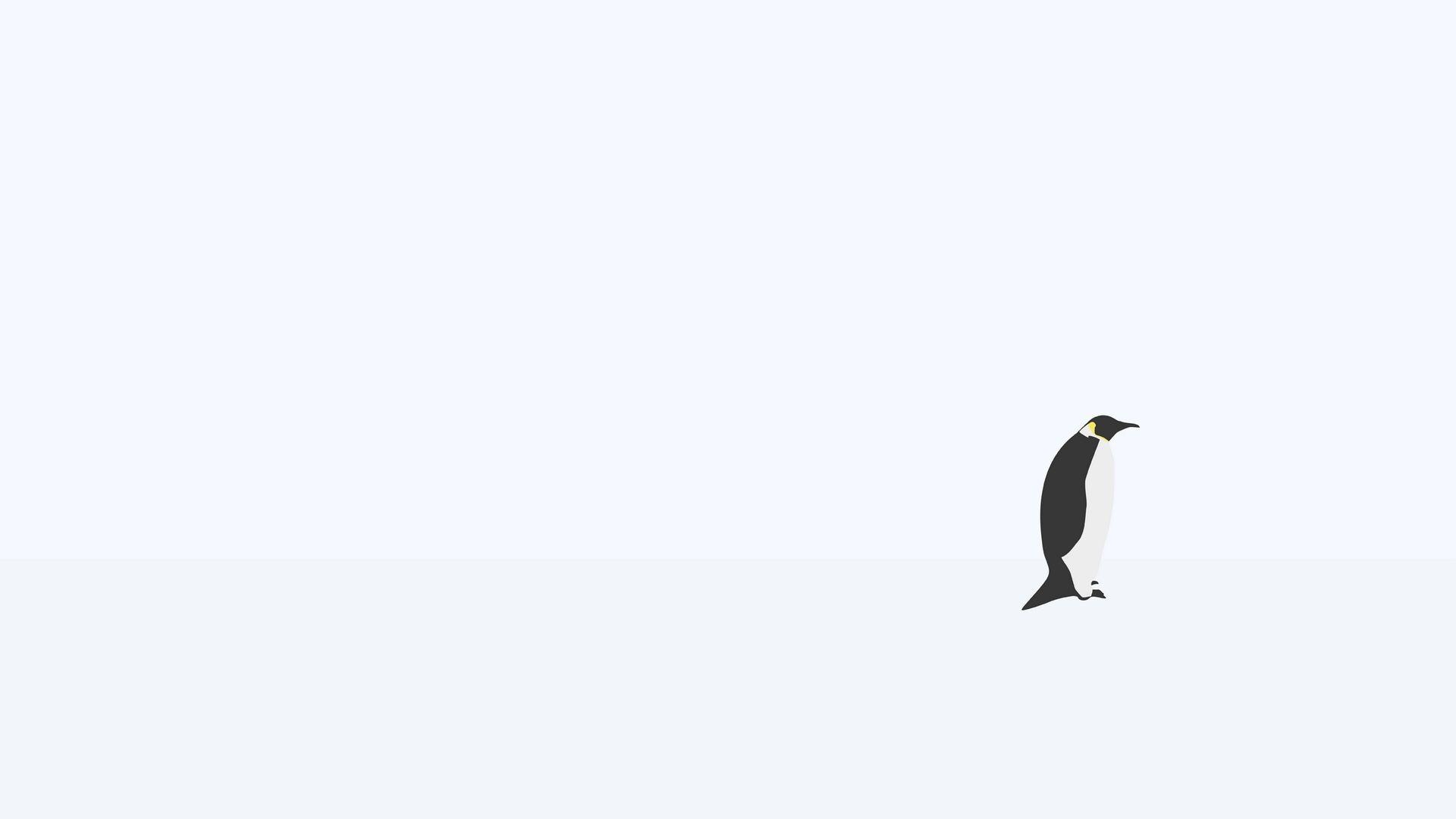 42 Minimalist Penguin Wallpaper On Wallpapersafari