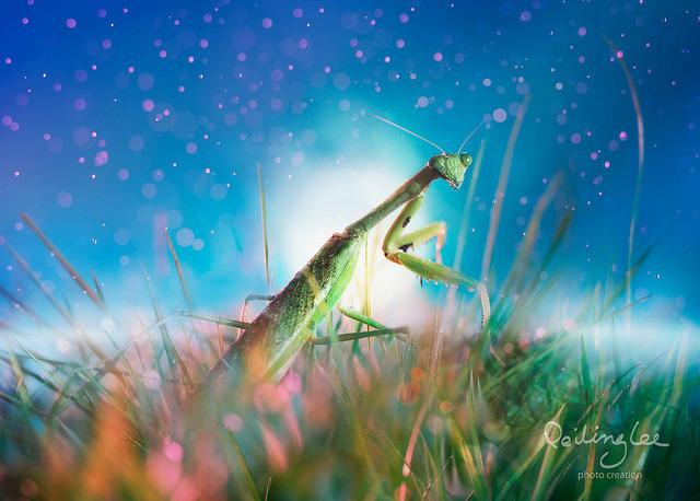 fabulous nature desktop wallpaper   wwwwallpapers in hdcom 640x458