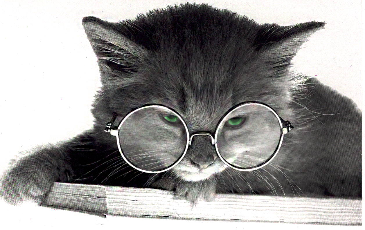 Cat With Glasses Wallpaper Cat in glasses 6 1257x793