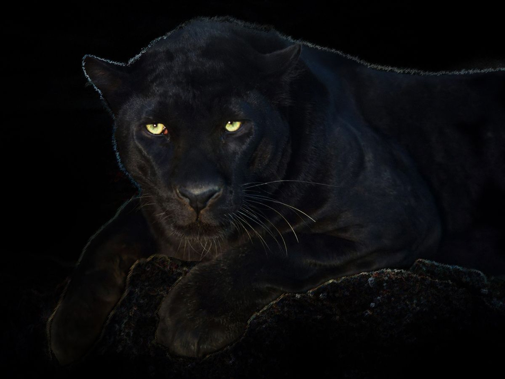 Download Scary Panther Eyes Picture Enjoy 1024x768
