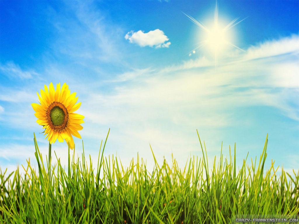 wonderful summer sky wallpaper - photo #34