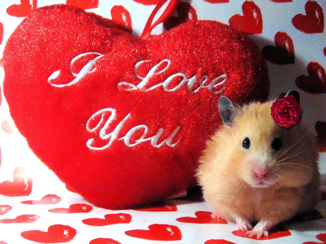 Love Valentine Hamster   Computer Screen Saver PC Desktop Wallpaper 1369x1025