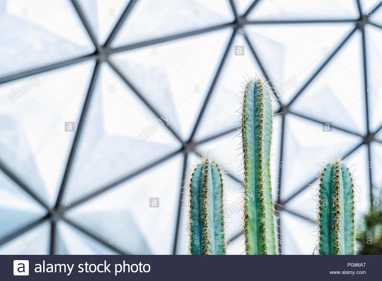 Close up of green cactus in the Geodesic Dome Glasshouse Nature 1300x956