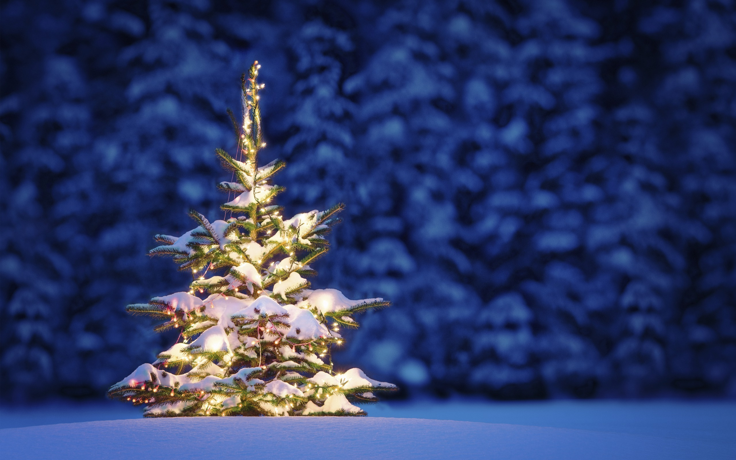50 Beautiful Christmas tree Wallpapers 2560x1600