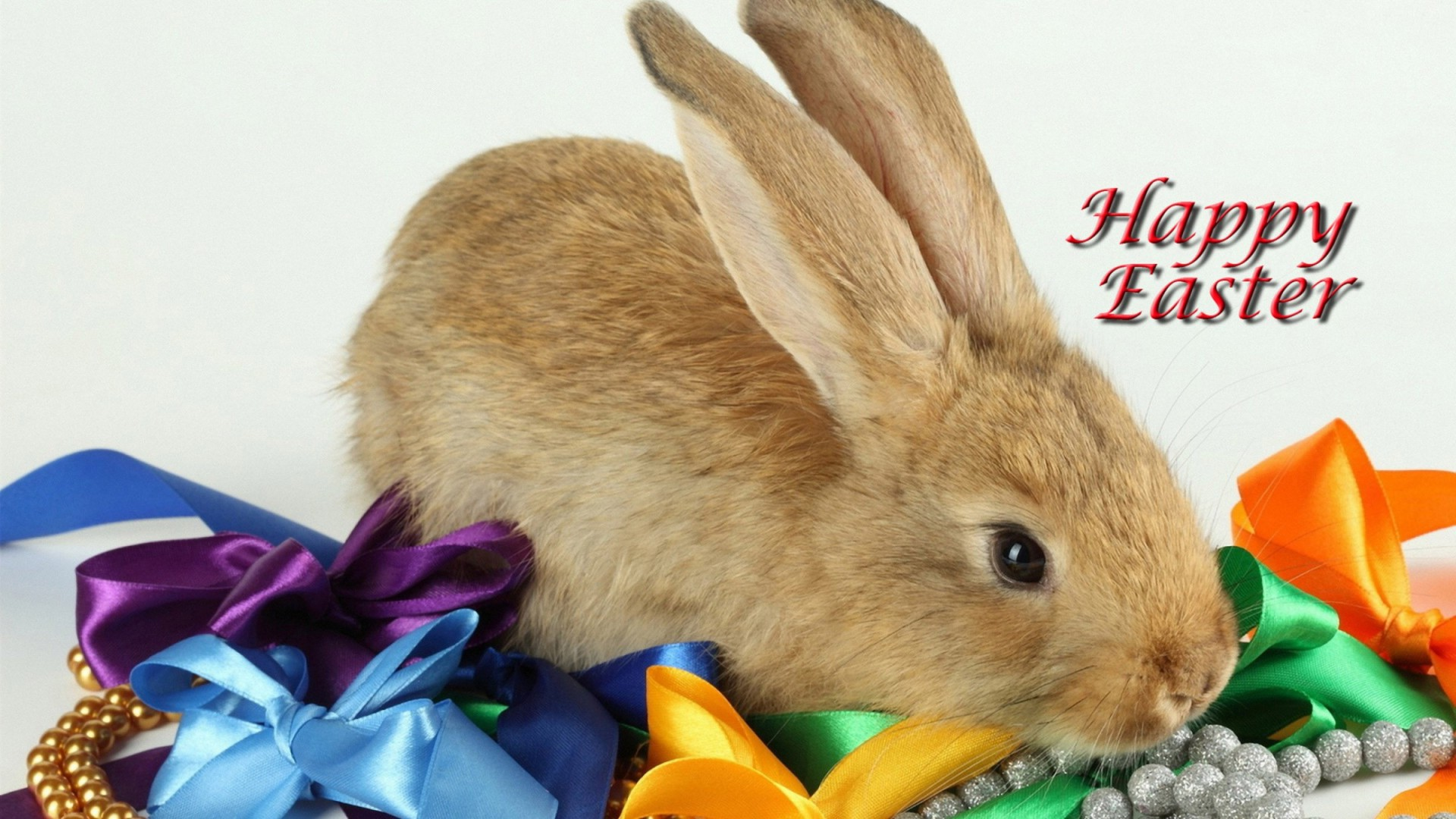 Happy Easter Bunny Pictures 5 1920x1080