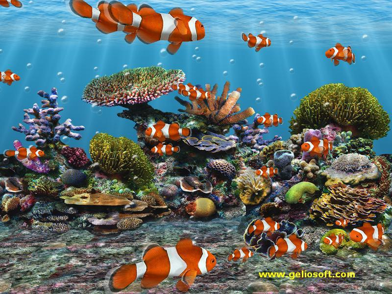 3D Screensaver and Wallpaper with Clown Fish 800x600
