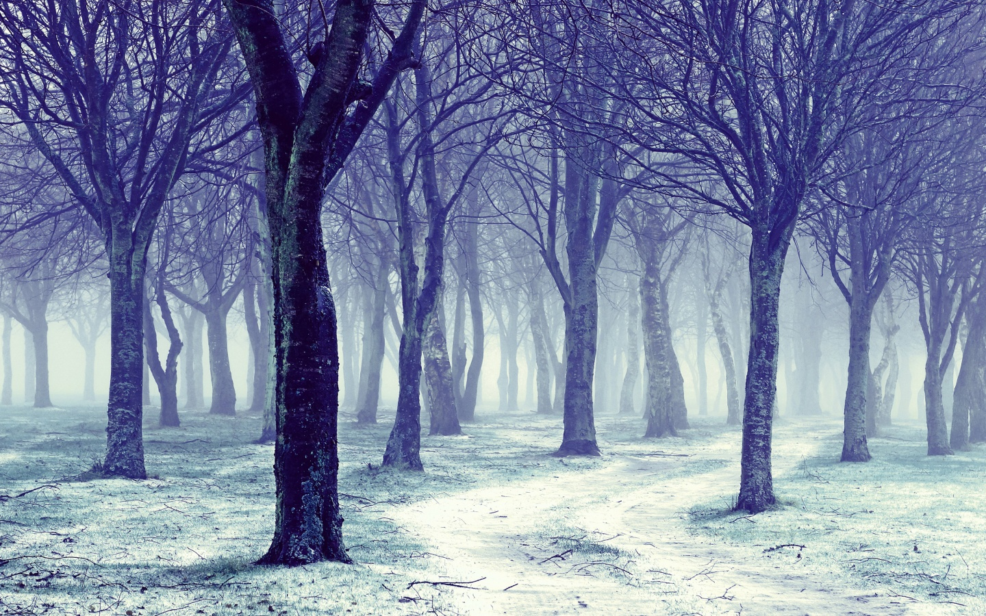 Nature Snowy Winter Forest Trees Wallpapers   1440x900   817260 1440x900