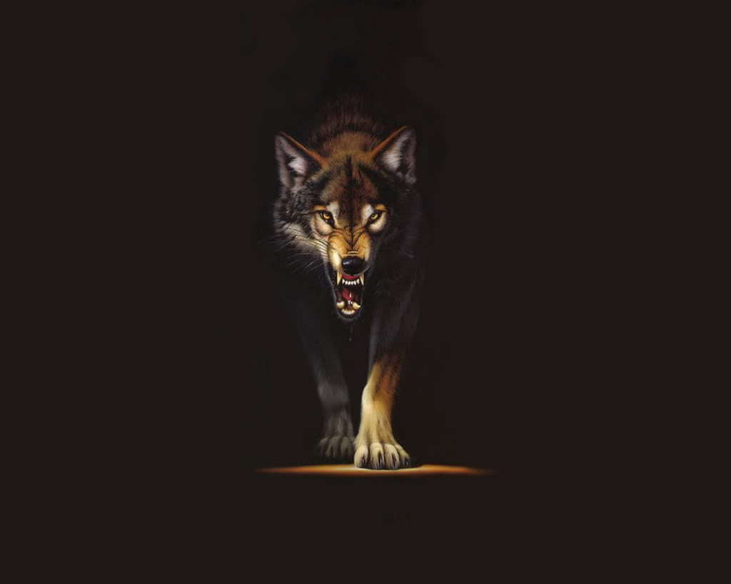 44 Black Wolves Wallpaper On Wallpapersafari