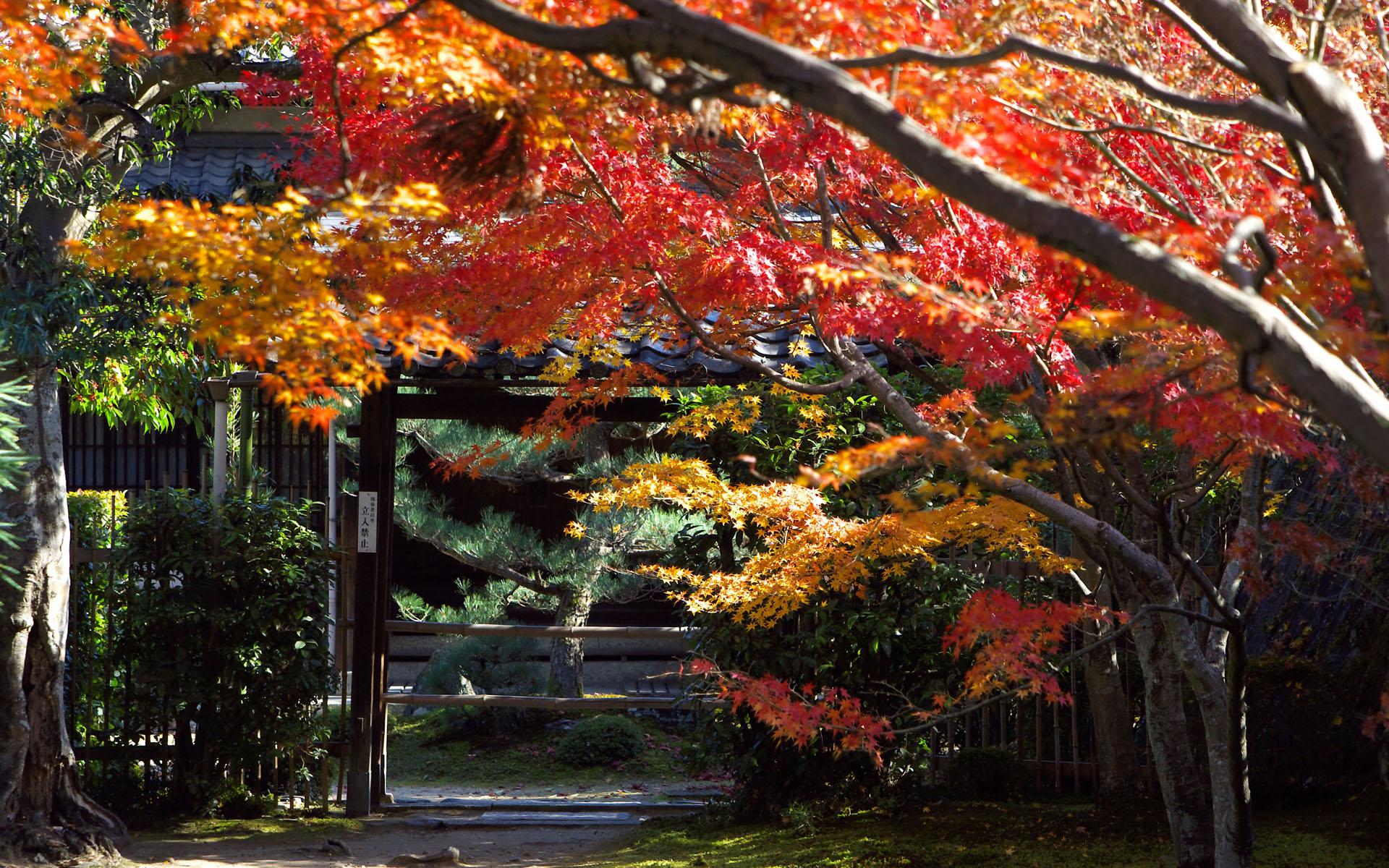 Japan Wallpapers Widescreen hd wallpaper background desktop 1920x1200