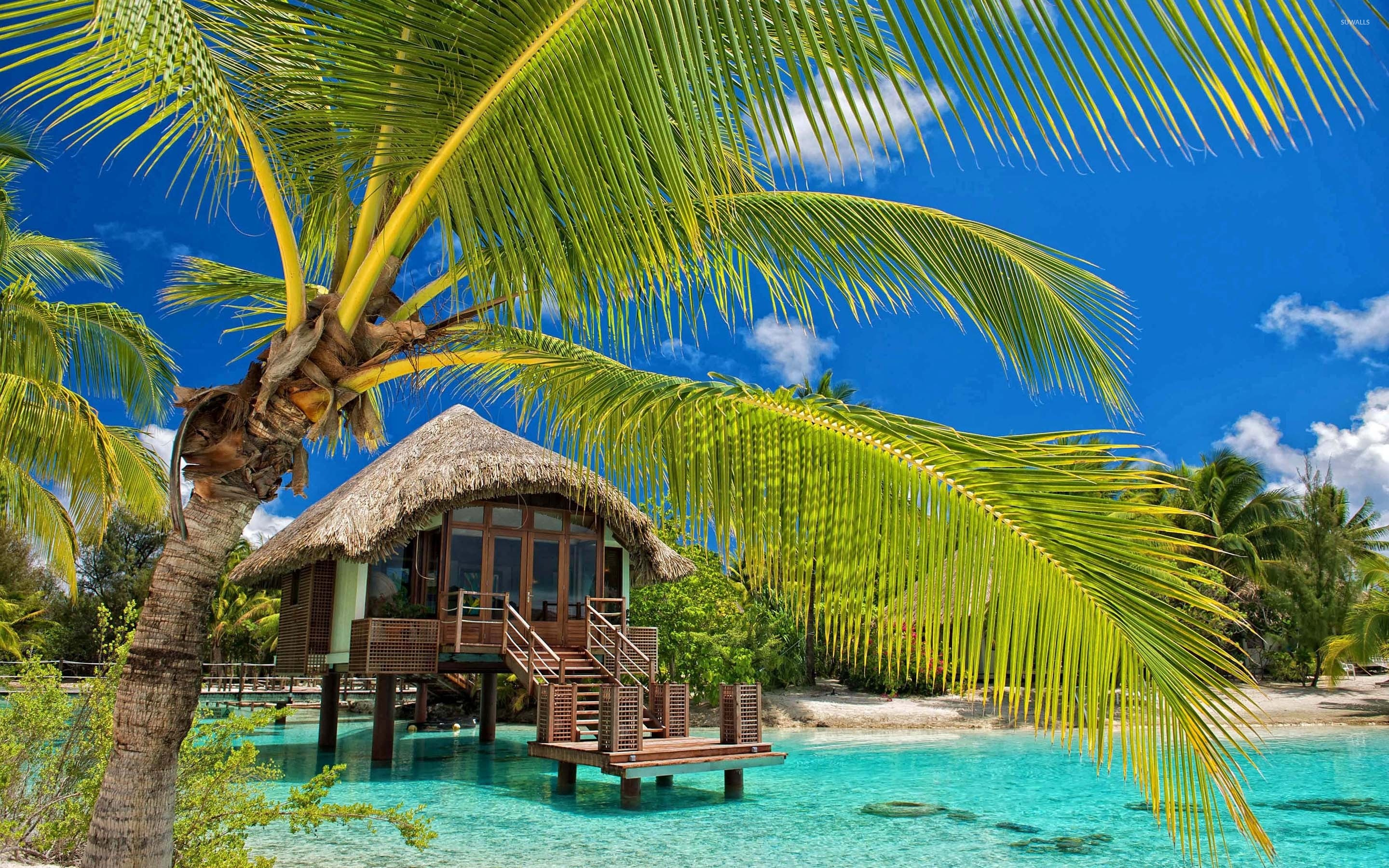 Caribbean Beach Hut Wallpaper Wallpapersafari