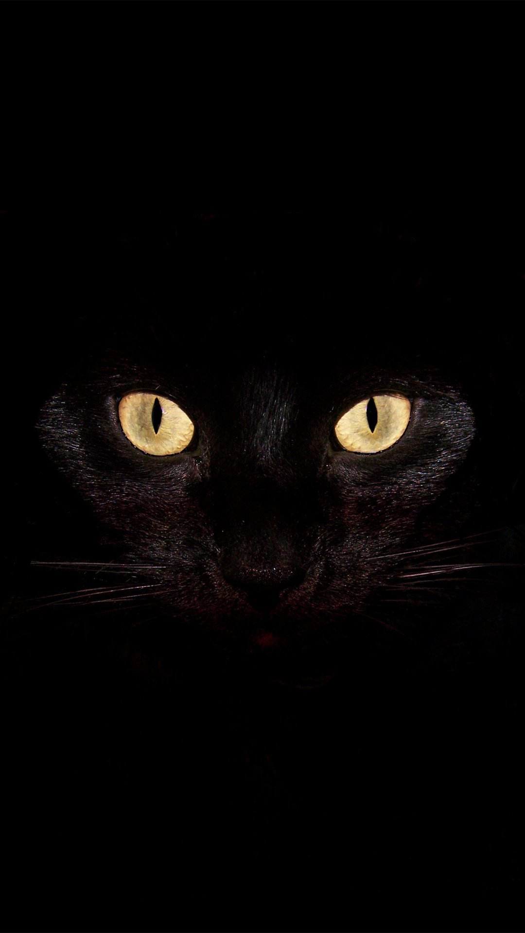 Black Cat Wallpaper For Android Wallpapersafari