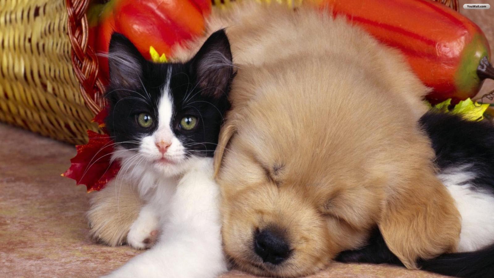 Cute Cat and Dog Wallpaper   wallpaperwallpapersfree wallpaper 1600x900