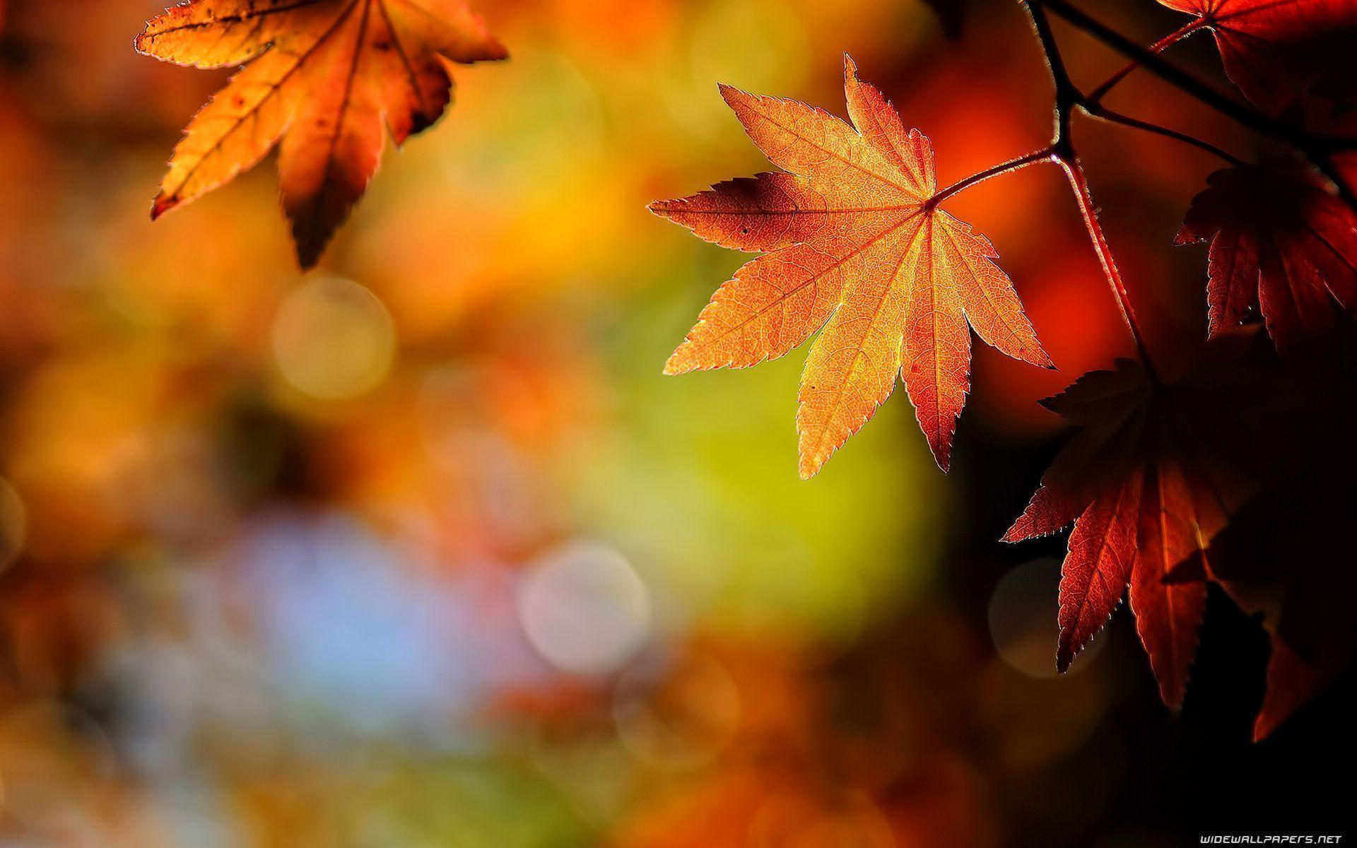 Autumn Leaves Desktop Wallpapers 1920x1200