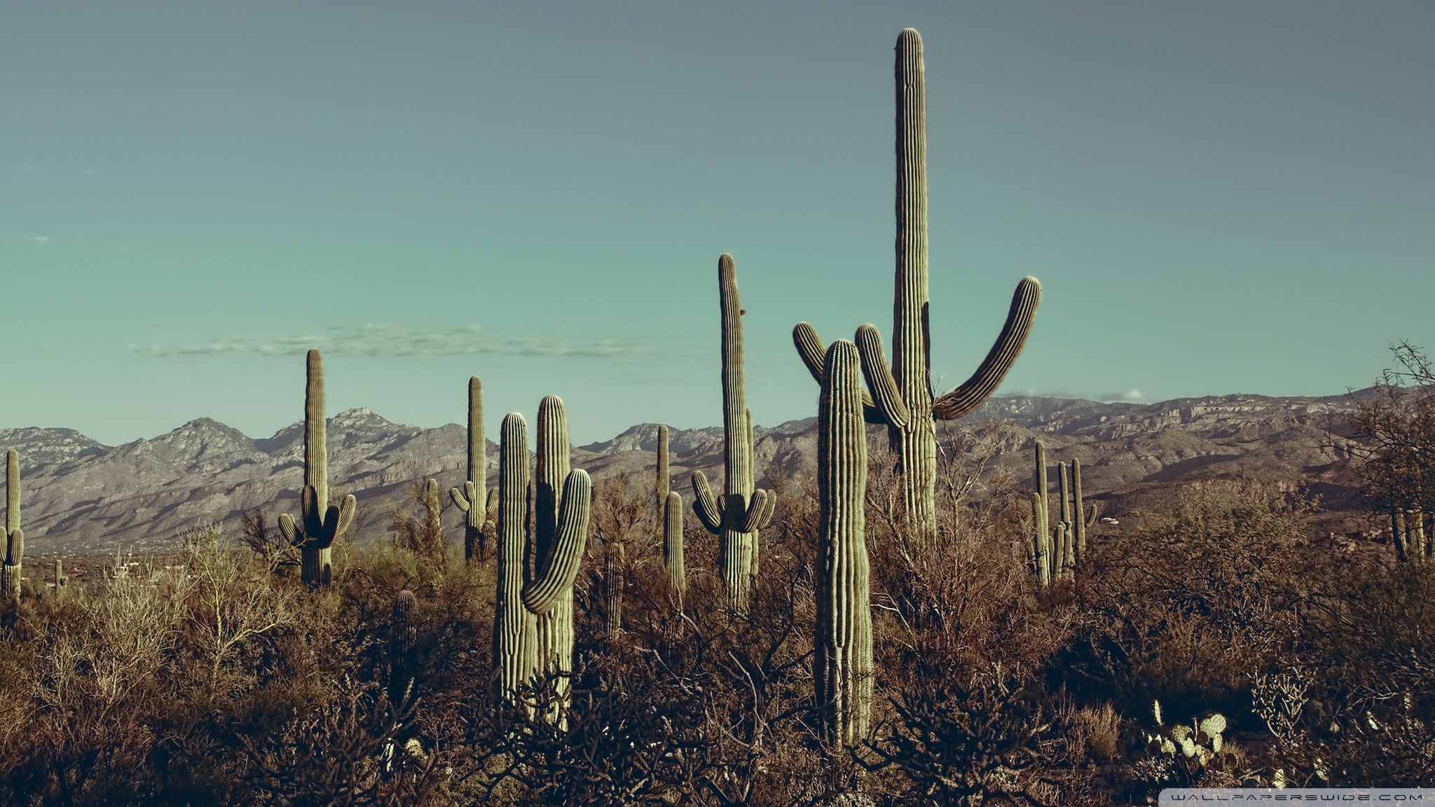 Saguaro National Park East Arizona 4K HD Desktop Wallpaper for 2048x1152