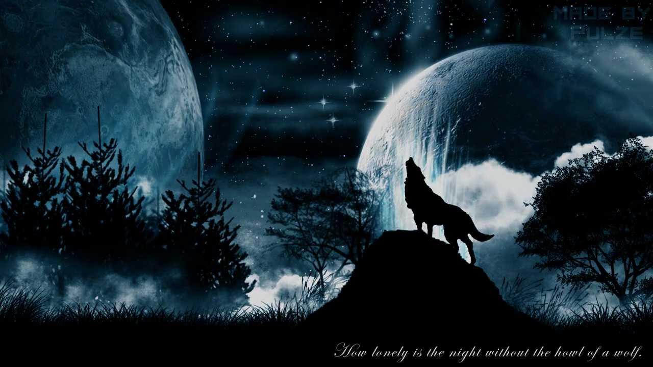 Wolf Wallpapers 009 Mb WallpapersExpertcom 1280x720