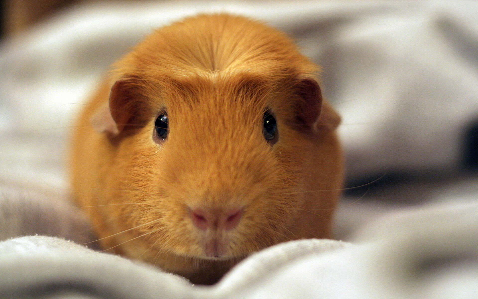 cute hamster wallpaper hot girl 1920x1200 1920x1200