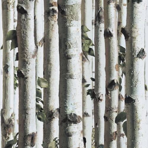 Silver Birch   J21517   Forest Tree Grey Wood Twig   Muriva Wallpaper 500x500