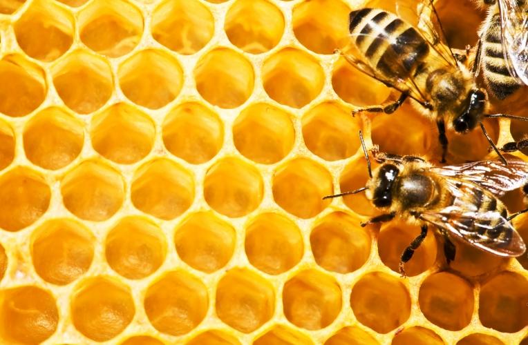 Bee Wallpaper Wall Mural MuralsWallpapercouk 764x500